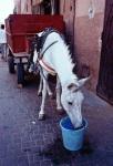 4-Horse, Marrakech, 2012