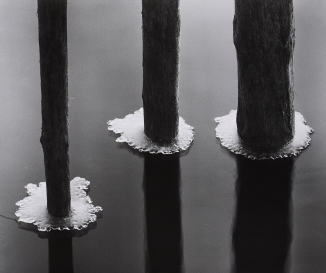 Toni Schneiders, Hibernal Decoration, 1962. Image courtesy of http://www.lempertz-online.de/